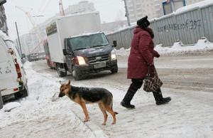 В Витебском районе проходит комплекс специальных мероприятий, направленный на профилактику ДТП с участием и по вине пешеходов