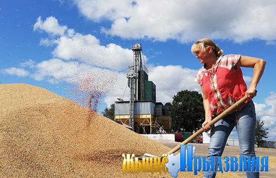 В филиале «Вымно» ОАО «Молоко» г. Витебск увеличиваются посевы гибридной ржи