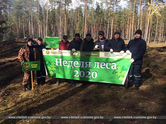 Витебские таможенники приняли участие в акции «Неделя леса»