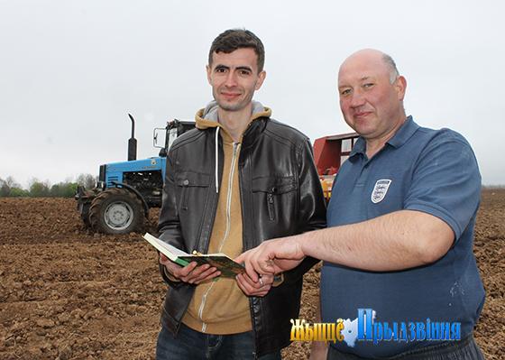 Витебский зональный институт сельского хозяйства НАН Беларуси производит семена суперэлитных сортов картофеля