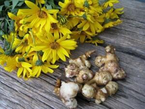 Топинамбур, или земляная груша, пригодился и в медицине, и в кулинарии