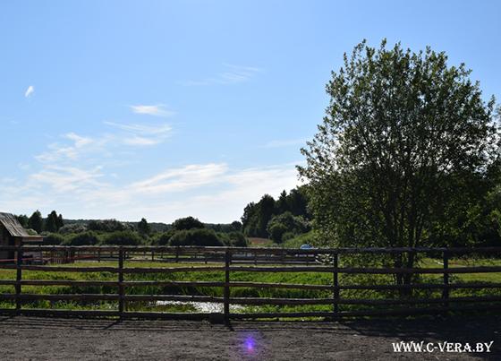 Дневники иппотерапии: как лошади помогают детям выздороветь