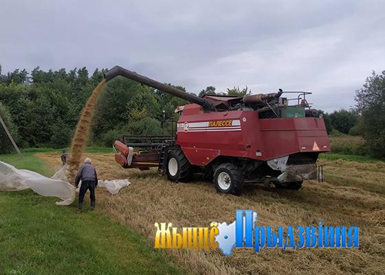 На снимке: сыплется зерно нового урожая.
