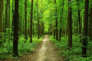 Витебская райинспекция природных ресурсов и охраны окружающей среды совместно с землеустроительной службой райисполкома и представителями ГЛХУ «Витебский лесхоз» провели профилактические рейдовые мероприятия