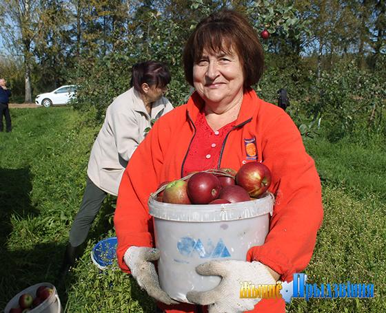 В ГСУ «Лужеснянская сортоиспытательная станция» полным ходом идет уборка урожая плодовых культур